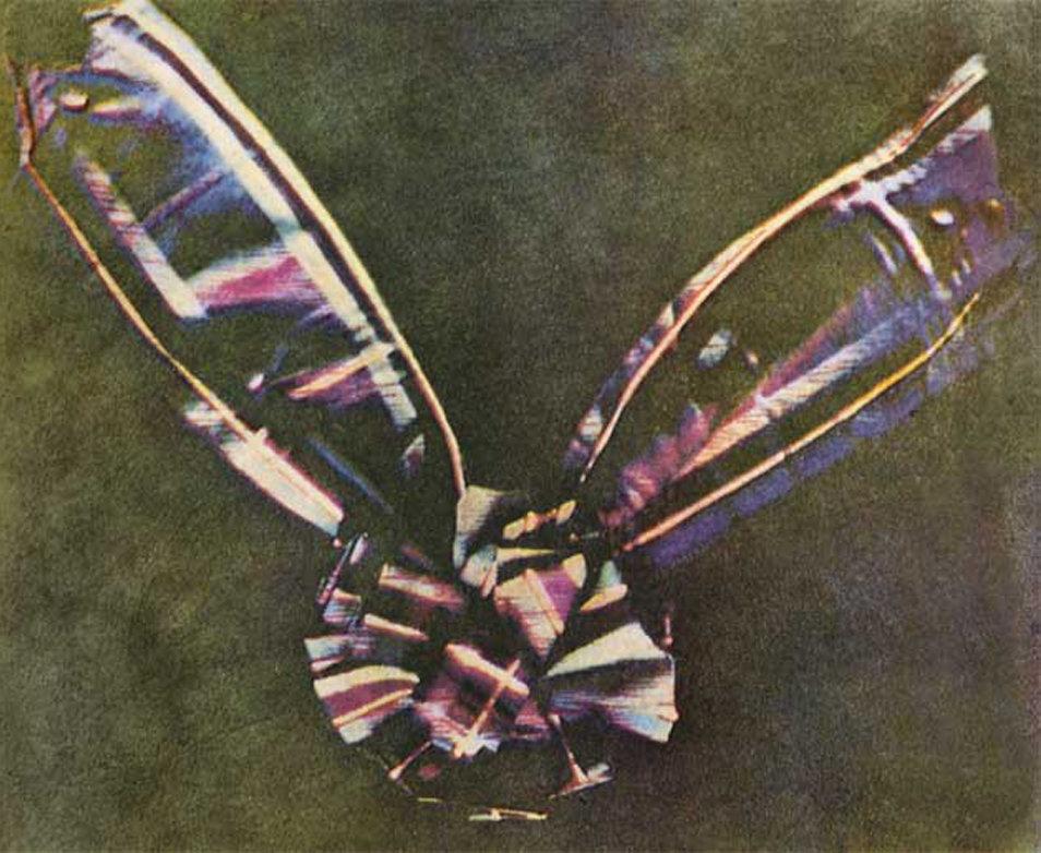 Tartan ribbon sfw